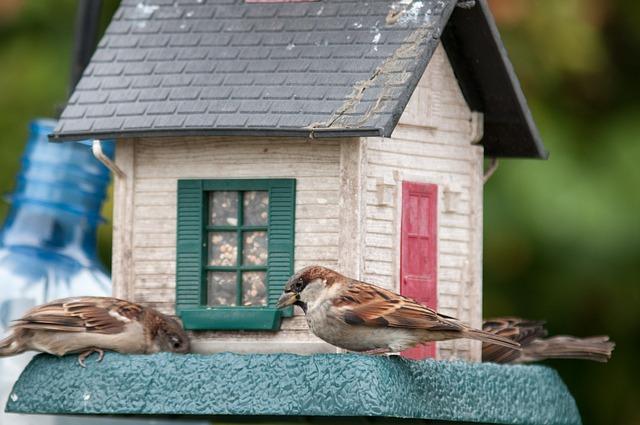 ptačí domeček
