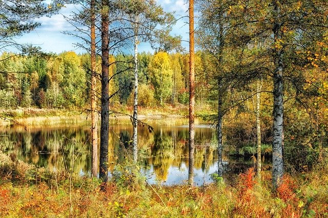 rybník u lesa.jpg